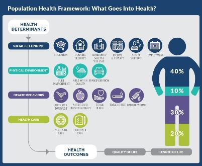 What Goes Into Health Graphic